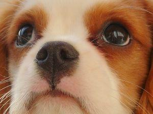 698864_little_puppy