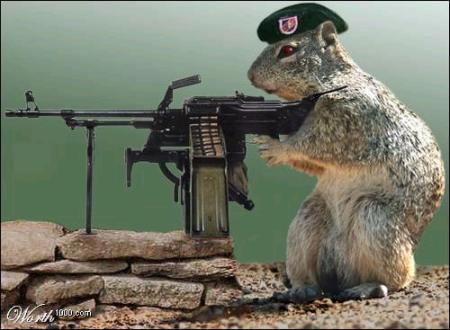 gb-rat