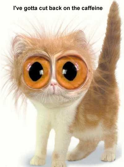kitty-caffeine