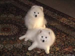 Resized640x480_2 pups - 12 weeks